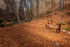 Wooden bench surrounded by autumn leaves in a forest in Corsica Stock Photo
