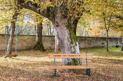 Wooden bench and swing in the autumn garden Royalty Free Stock Photos