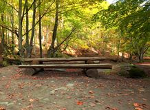 Wooden bench and table for picnic in autumn forest Royalty Free Stock Photography