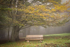 Wooden bench under autumn tree Stock Photo