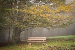 Wooden bench under autumn tree stock photo