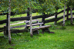 Wooden bench under birch trees. Next to a wooden fence Stock Photography