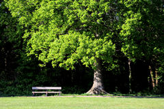 Wooden bench under oak tree. A wooden bench under the shade of an oak tree in a park Stock Image