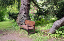 Wooden Bench Under Spruce Trees. Wooden bench under the spruce trees, a restful place to sit down Stock Image