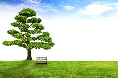 Wooden bench under a tree. Wooden bench standing among the green bushes under a tree with beautiful blue sky and sunny Royalty Free Stock Photography