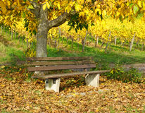 Wooden bench under tree in autumn Royalty Free Stock Photography