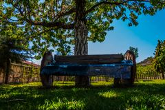 The wooden bench under the tree Stock Image