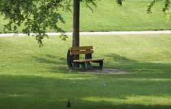 A wooden bench under the tree. A lonely moments in the park royalty free stock photos