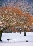 Wooden bench under the trees in winter forest. Lovely nature scenery Royalty Free Stock Photography