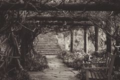Wooden Bench Under Vine Covered Arbor Near Stairway in Grayscale Photography Royalty Free Stock Photos