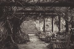 Wooden Bench Under Vine Covered Arbor Near Stairway in Grayscale Photography Stock Photo
