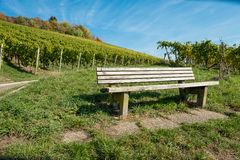 Wooden bench in a vineyard. In fall Stock Photos