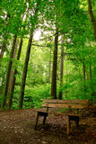 Wooden bench in the wild Royalty Free Stock Images