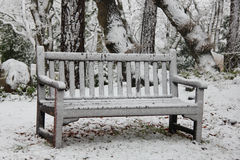 Wooden bench in a winter forest Stock Image