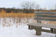 Wooden Bench on a Winter Trail Royalty Free Stock Images