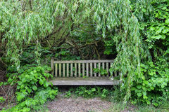 Wooden bench in the woods royalty free stock photo