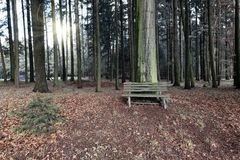 Wooden bench in the woods Stock Photos