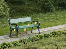 A wooden bench with yellow tulips in a spring garden Royalty Free Stock Photos