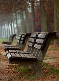 Wooden benches in autumn Royalty Free Stock Photos