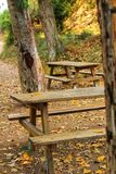 Wooden benches in the forest royalty free stock photo