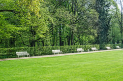 Wooden benches in Lazienki park Stock Photography