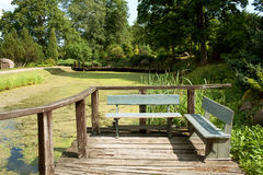 Wooden benches at an old pond. Two wooden benches at an old pond overgrown with slime in the summer stock photo