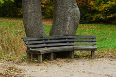 Wooden benches in the park Royalty Free Stock Photography
