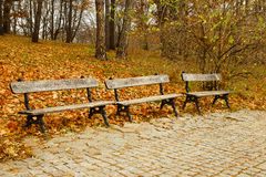 Wooden benches in the park in autumn Stock Photography