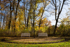 Wooden benches in the park Royalty Free Stock Photos