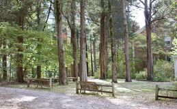 Benches in a Grove of Trees Stock Photos