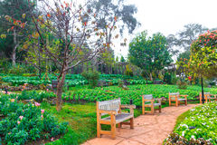 Wooden benchs in a beautiful park garden Stock Images