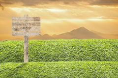 Wooden billboard on the grass Royalty Free Stock Photography