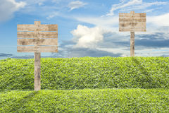 Wooden billboard on the grass Royalty Free Stock Photo