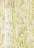 Wooden Birch texture Royalty Free Stock Image