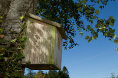 Wooden bird box. A wooden bird box with lid and hole attached to a silver birch tree with branches and leaves against a blue sky Stock Photo