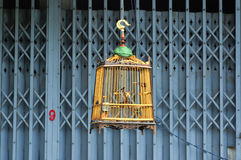 Wooden bird cage Stock Photos