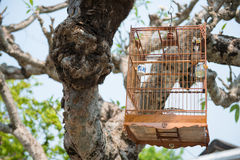 Wooden bird cage hanging on tree Stock Images