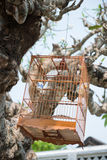 Wooden bird cage hanging on tree Royalty Free Stock Photo