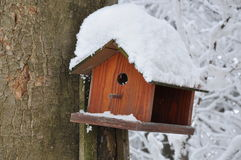 Wooden bird feeder Stock Images