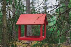 Wooden bird feeder hanging in a pine forest. Red wooden bird feeder hanging in a pine forest stock photography