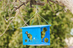 Wooden bird feeder and silhouettes of birds Stock Images