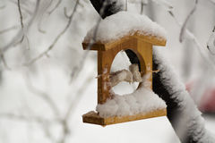 Wooden bird feeder in the snow hanging on a tree branch. Lodge with food for birds, Royalty Free Stock Photography