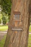 Wooden bird feeder on the tree trunk Stock Photo