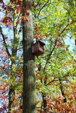 Wooden bird feeders Royalty Free Stock Image