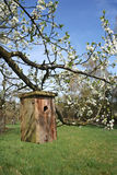 Wooden bird house. Hanging on blooming apple tree stock photography