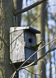 Wooden bird house detail Stock Photo