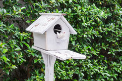 Wooden bird house with green Stock Photo
