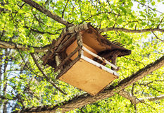 Wooden bird house hanging on the green tree, detailed natural sc Royalty Free Stock Images