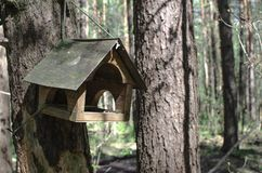 Wooden bird house hangs on a tree in a green forest. A Wooden bird house hangs on a tree in a green forest stock image
