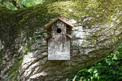 Wooden bird house on huge moss covered branch stock photos